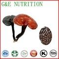 Здоровья пищевых добавок, органических ganoderma lucidum экстракт капсулы 500 мг * 100 шт.