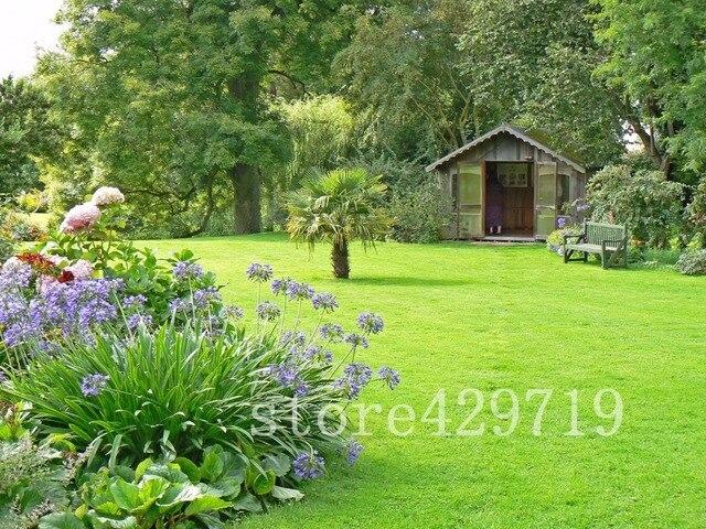 100 قطعة اليابانية الغابات العشب الحديقة ، المعمرة دائمة الخضرة الحديقة بونساي النبات ، جميلة حديقة نباتات الزينة ، سهلة تنمو