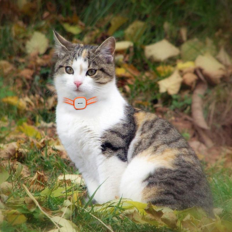 GPS jälitusseade kassidele ja koertele