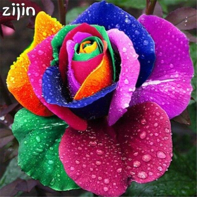 Tan hermosa rosas 200 unids/bolsa Alemania raro dragón Rosa Bonsai plantas para el bricolaje Jardín de la casa y balcón de colores de mezcla
