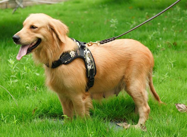 Adjustable Vest Harness for Big Dogs