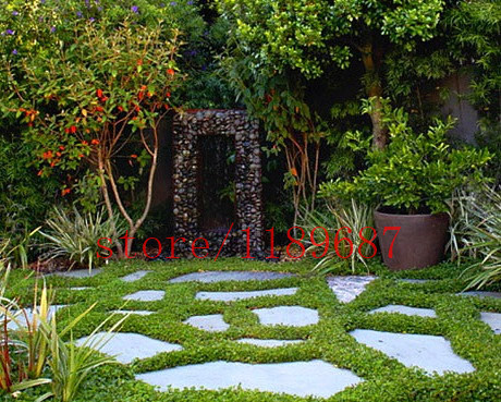 Popular Green Ground Cover Buy Cheap Green Ground Cover