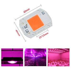 Image 5 - 100 pces ac110v 220 v cob led chip phyto lâmpada espectro completo 20 w 30 w 50 diodo led crescer luzes fitoampy para mudas interior
