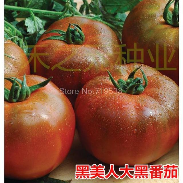 Black Beauty Black Tomato Seeds large fruit large black tomato seeds 100 seeds