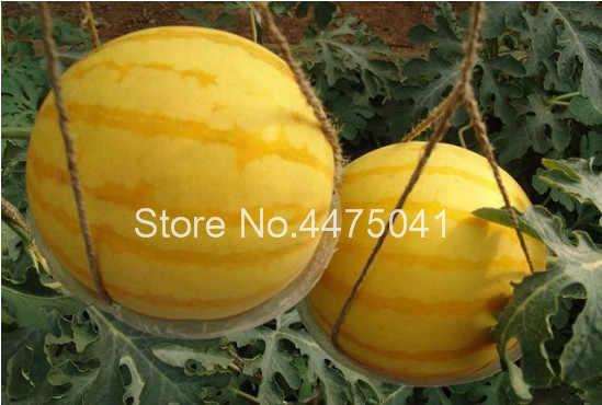 30 قطعة العملاق البطيخ بونساي الأصفر الأحمر العضوية الفاكهة بونساي جدا العملاقة لذيذ البطيخ الفاكهة بونساي النبات للمنزل حديقة