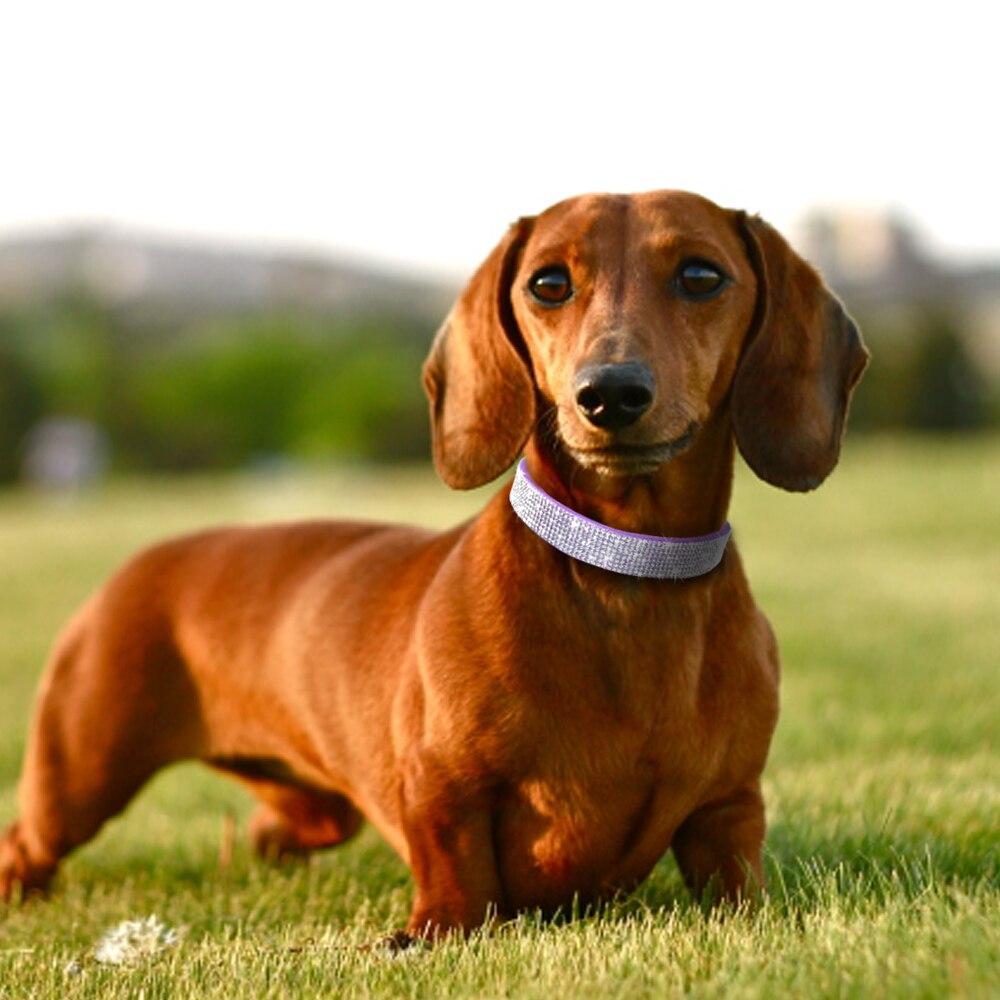 strass collier chien