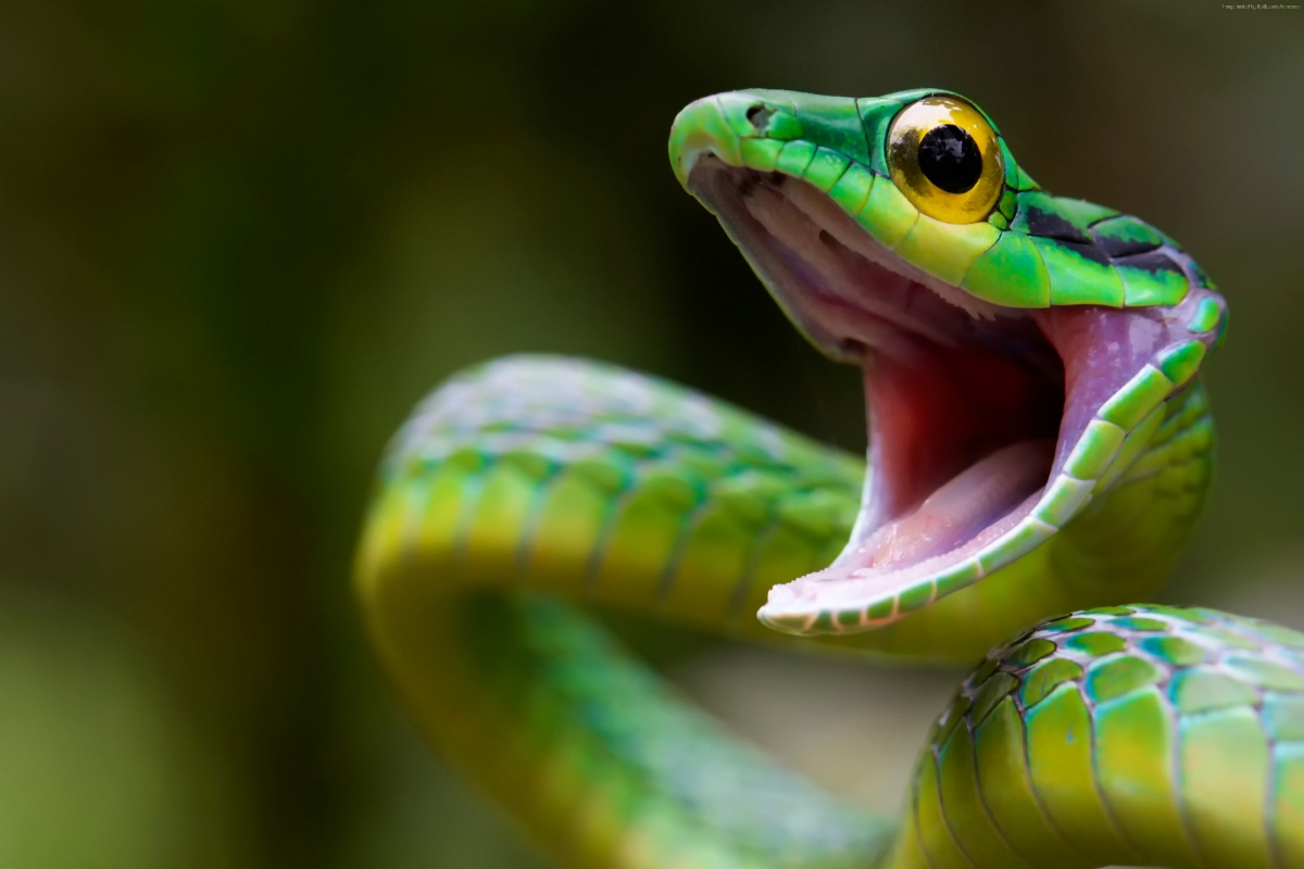 snake - HD1680×1050