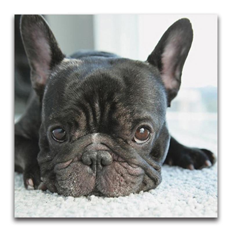 5D Diy Diamond Painting Cross Stitch small black dog heads full Diamond Embroidery french bulldog round Diamond Mosaic puppy