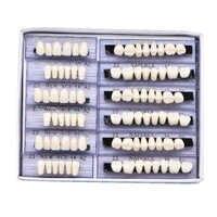 6 zestaw zębów dentystycznych deture Dental lab dentysta dentysta