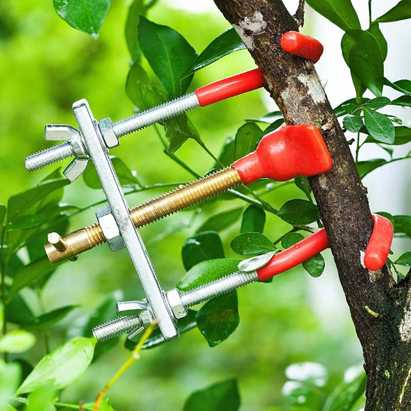 Bonsai Branch Bender Exceptional Wonderful Gyrate Installation Made By Tian Bonsai Tools