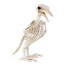 45 Koleksi Gambar Kerangka Hewan Burung Gratis Terbaik