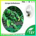 5g Hot vender Atropa belladonna Extrato com frete grátis, escopolamina 99%