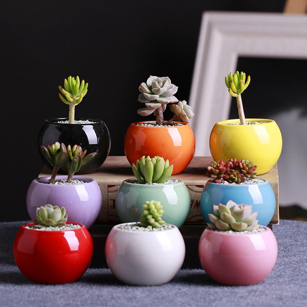 Wholesale Mini Succulents