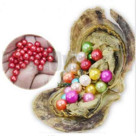 20 pcs/lot Warna Campuran Putaran Akoya Pearl Oyster 6-7 MM Tunggal Cinta Mutiara di Air Asin Oyster Pesanan Sampel 27 Warna ABH758