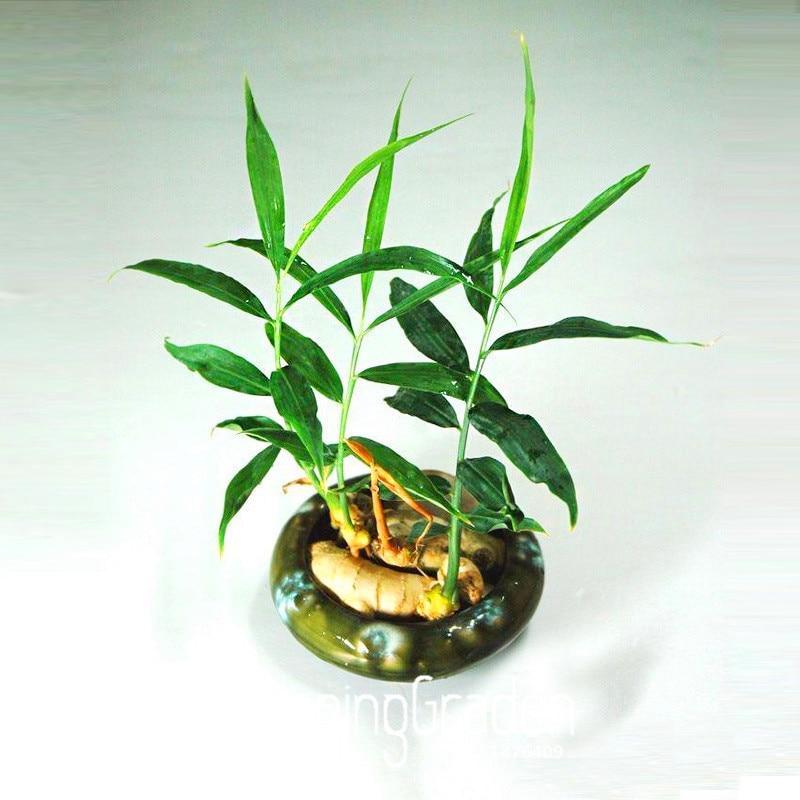 Best-Selling!100 Pcs/Bag Ginger garden Balcony Vegetables Potted Bonsai Plant flores Four Seasons Zingiber plantas Plants ,#ZIU3 流水 盆 養魚