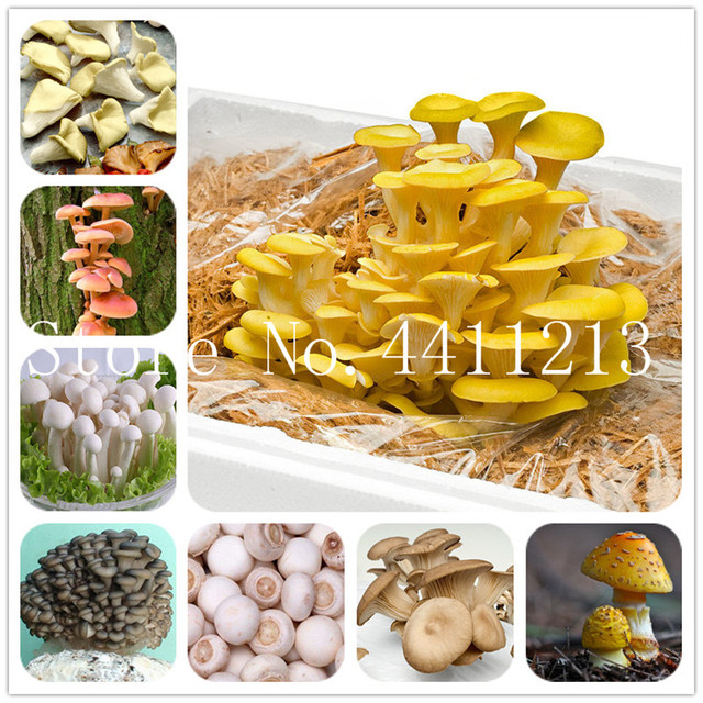 Edible Colorful Mushroom Bonsai Seeds (500 Pieces)