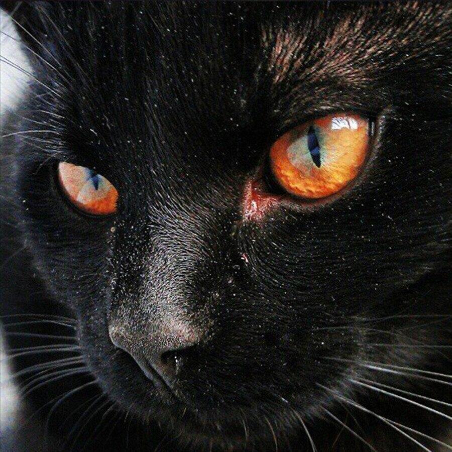 50 semi perlas gatos ojos ca:15mm bricolaje tarjetas diseño
