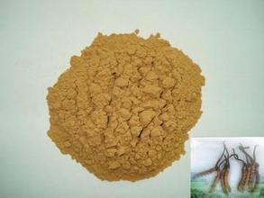 100g polvo de Cordyceps Polisacárido extracto de la planta 30%