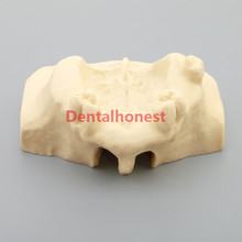 цена на 2019 high quality Dental Sinus Lift Practice Teeth Model Typodont Study Model 2013F Model