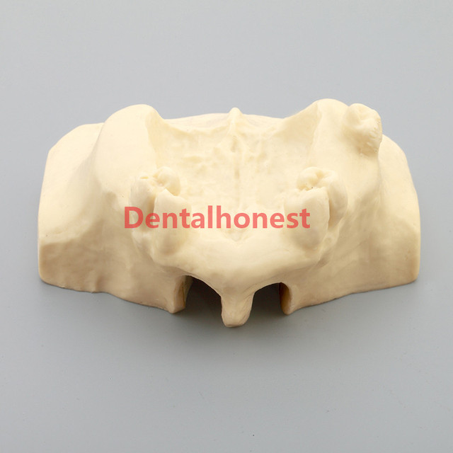 2019 high quality Dental Sinus Lift Practice Teeth Model Typodont Study Model 2013F Model
