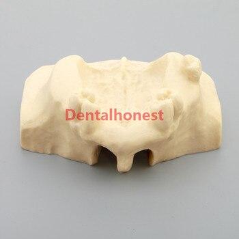 цена на high quality Dental Sinus Lift Practice Teeth Model Typodont Study Model 2013F Model