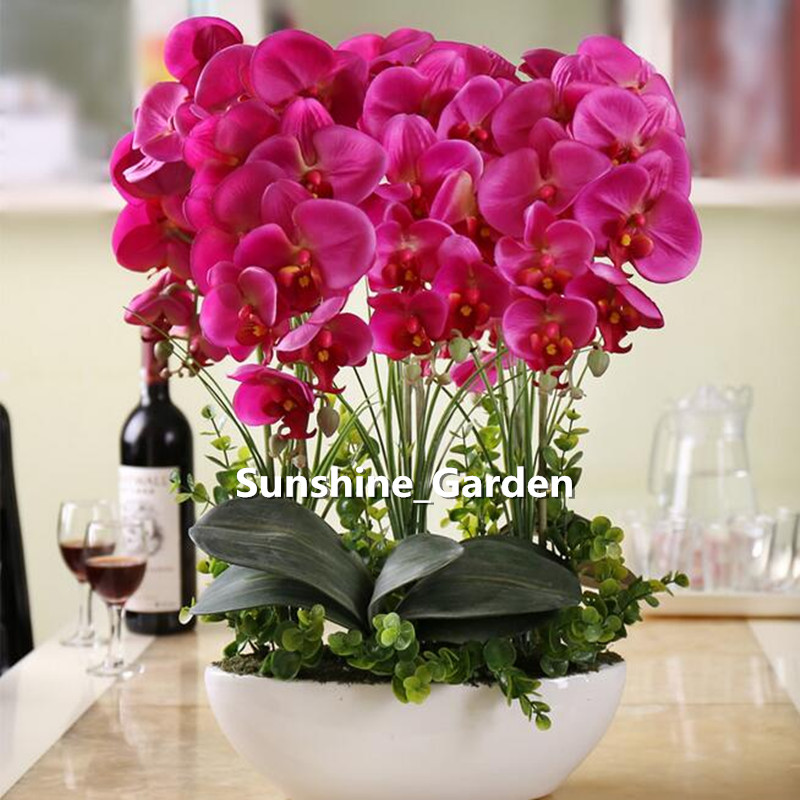 Lovely Decorative Indoor Flower Pots #7: 50 Seeds/pack,Phalaenopsis Suite Living Room Interior Decoration Flowers  Potted(China (