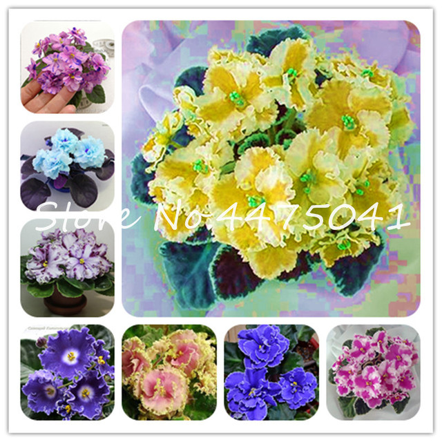 Hot! 100 Pcs Mix Color Available African Violet Bonsai For Viewing Flower Evening-Scented Stock Violet Perennial Herb Violets