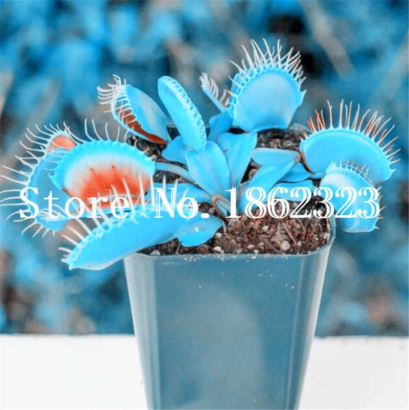מכירה! 100 Pcs עציצי חרקי צמח Dionaea ענק Muscipula קליפ ונוס Flytrap ונסאי צמח טורף DIY בית גן