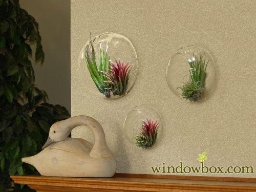 online get cheap terrario di vetro della parete bolle -aliexpress ... - Bollicine Acquario Fai Da Te