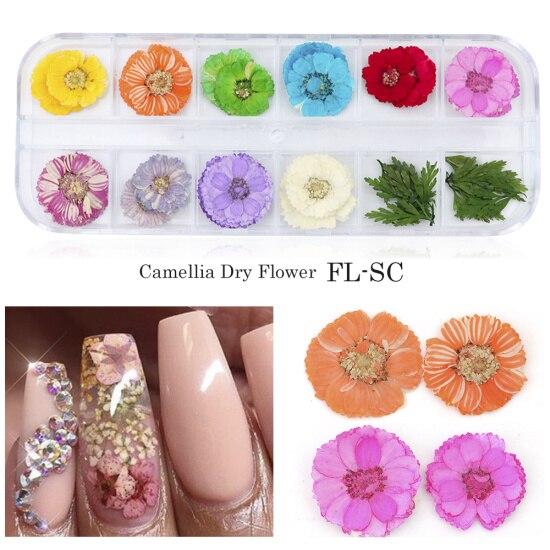 Сухоцветы лист ногтей украшения натуральный наклейка в виде цветка 3D сухой для маникюра ногтей наклейки ювелирные изделия УФ Гель-лак Маникюр TRFL-1 - Цвет: FL-SC