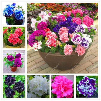 100 pcs/bag petunia seeds, double petals petunia flower seeds, perennial bonsai pot plant for home garden easy to grow