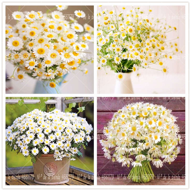 100 Pcs/Bag feverfew Bonsai Plant Garden Decorative Flower Plants Home Potted Chrysanthemum