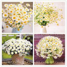 100 Pcs/Bag feverfew Bonsai Plant Garden Decorative Flower Plants Home Potted Chrysanthemum