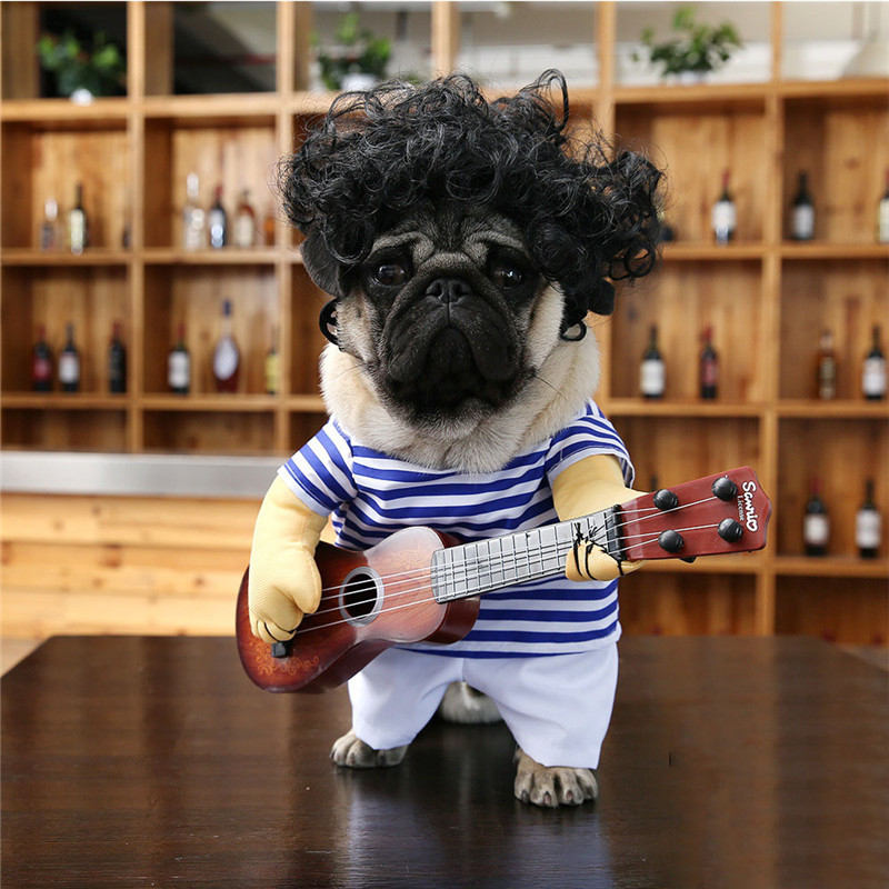 dog coat for pug  (1)