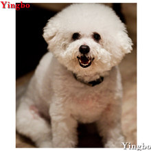 Compare Prices on Bichon Frise Dog- Online Shopping/Buy Low