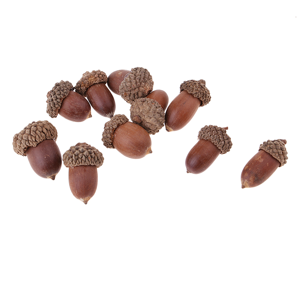 10Pcs Natural Mini Acorns Dried Flowers Christmas Accents Home and Decor  Ornaments Lightweight Natural Dried Acorns