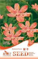 (Mix minimum order $5)1 original pack 10 pcs seeds officinalis Blackberrylily Rhizome,officinalis seed  free shipping