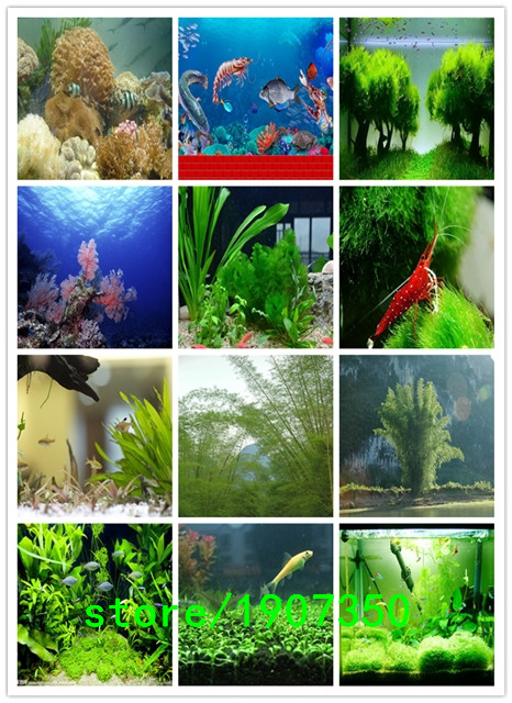 Home Aquarium Decorations