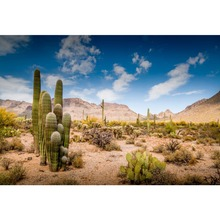 Laeacco Cactus Desert Shrub Hillside Blue Sky Cloudy Natural View Photo Backgrounds Photography Backdrops For Studio