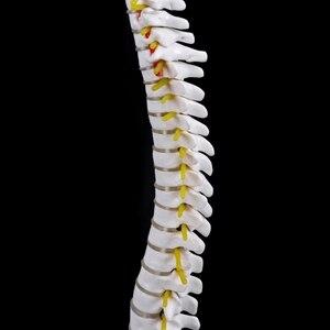 Image 4 - 45センチメートル人間の解剖学的背骨骨盤flexibleモデル医療援助学ぶ解剖
