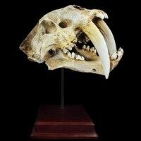 Бесплатная доставка страшный меч зубчатый тигр череп модель для симуляции живопись черепа модель Хэллоуин макет сцены реквизит