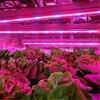 LED Grow Lights DC12V Growing LED Strip Full Spectrum Aquarium Greenhouse Plant Growth Light Set US