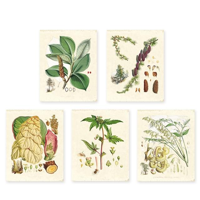 Vert plantes ensemble de 5 Vintage illustrations Botaniques, art floral imprime HD impression Fleur Wall Art tirages seulement sans cadre 1