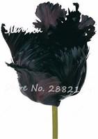 Rare-black-tulip-flower-seeds-20-particles-Flowers-symbolizes-love-beautiful-tulipanes-flower-seeds-home-garden.jpg_200x200