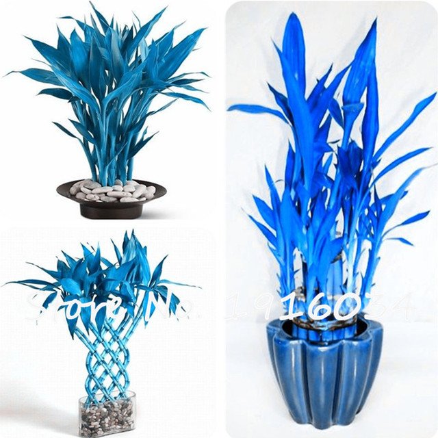 gl vase decoration ideas pictures with Lucky Bamboo Decor on EOi64G also Flower Glass Vase Designs together with 14w8A5e d8s15z8o4 besides 1FS9f28 pk83829 besides Flower Vases With Artificial Flowers.