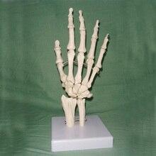 1:1 ЖИЗНЬ Размеры человеческих рук совместное модель ручной скелет кости модель наручные vola palm Модели скелетов Медицинские товары учебные принадлежности