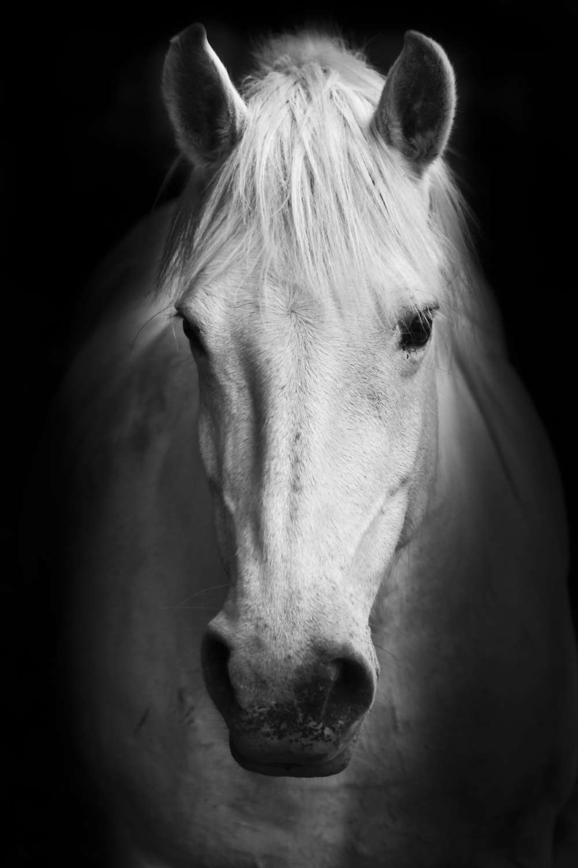 Black horse face close up - photo#47