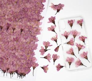 250 шт прессованный высушенный Вишневый Сакура Цветочные растения гербарий для смолы Изготовление ювелирных изделий рамка для открытки чех...