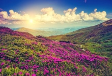 Laeacco Mountain Flowers Blue Sky Clouds Sunset Scenic Photography Backgrounds Customized Photographic Backdrop For Photo Studio