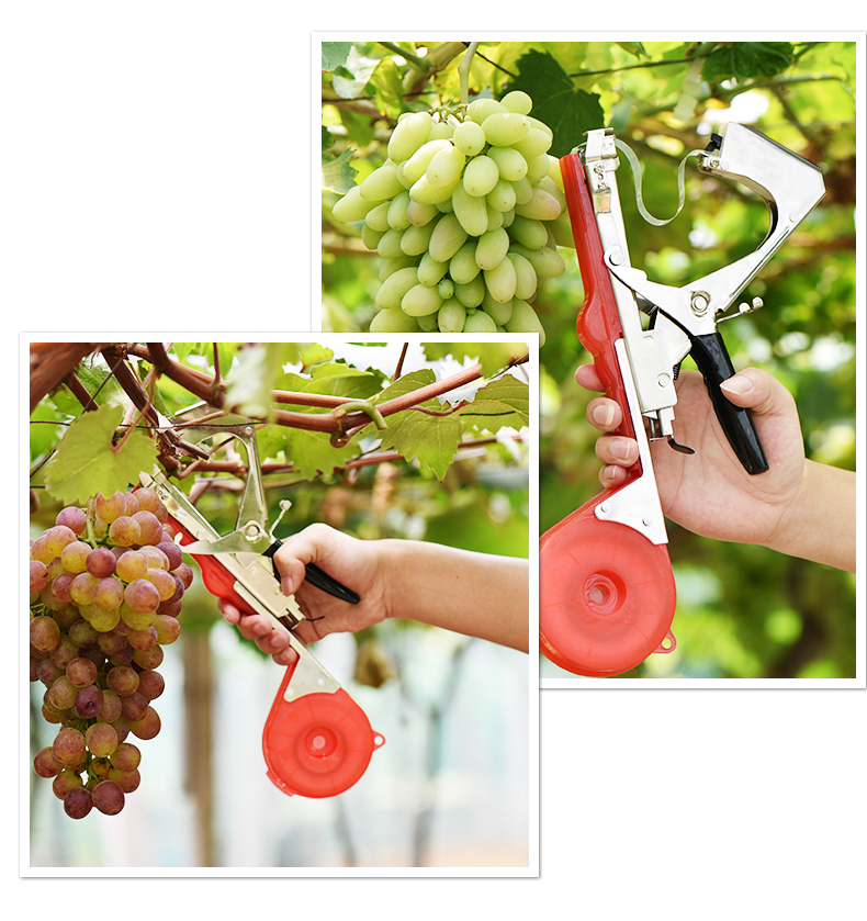 Fruit and vegetable tying machine / fixed binding pliers / grape tying pliers / fruit and vegetable tying pliers